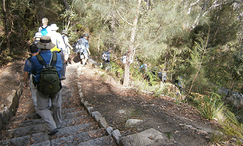 A group of bushwalkers on walking along the Hornsby Heritage Steps and Trail